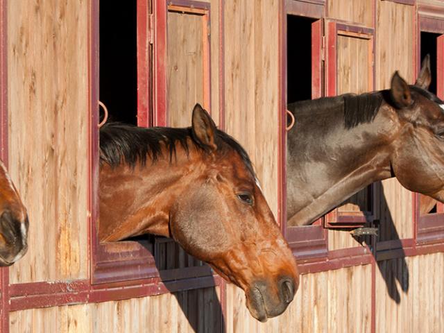 Brumisateur pour élevage et écurie de chevaux