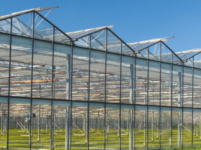 Brumisateur pour serre ou tunnel horticoles ou agricoles et serre d'orchidées