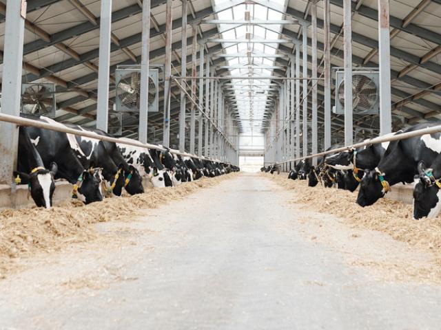 Brumisateur pour rafraichir les bâtiments d'élevages et les cornadis ou aires de stabulation bovines