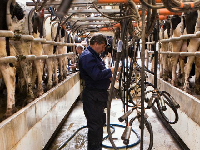 Brumisateur pour salle de traite vache laitière
